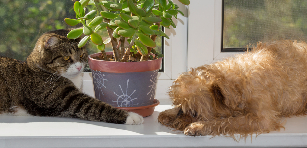 Tips for Decorating Your First Home with Pet-Friendly Plants