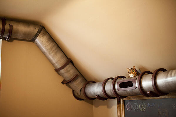 Dream Home Design Ideas for an Amazing House cat tube 2