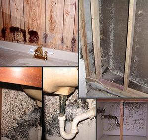 What-Happens-When-the-Home-You-Want-to-Buy-Has-Mold.jpg