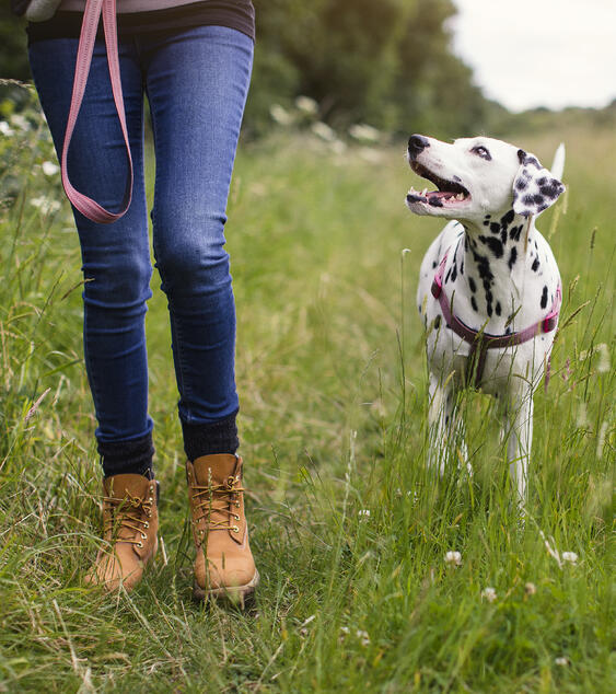 girl-walking-dog-country