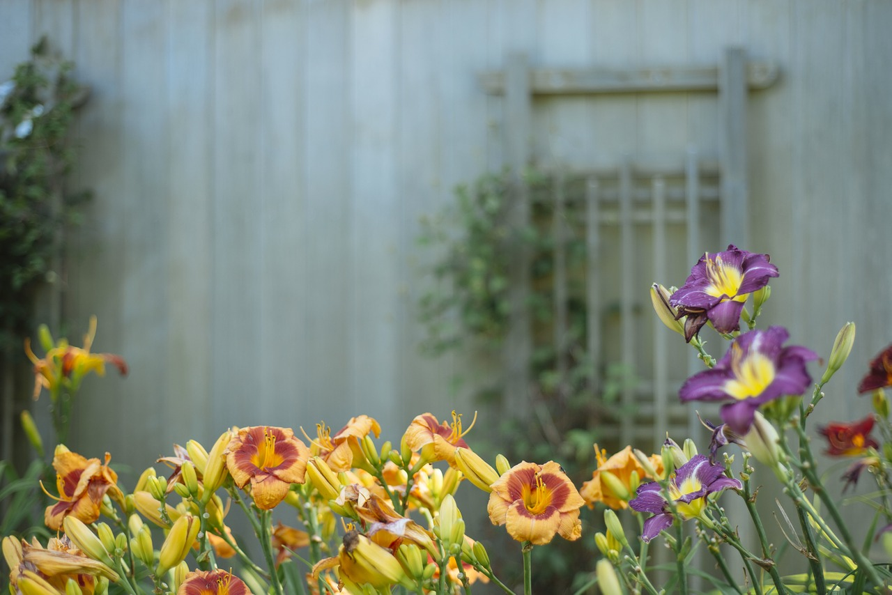 How Garden Improvements Can Boost The Value Of